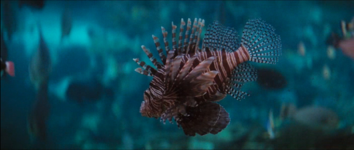 A red lionfish (Pterois volitans) featured in the film The Spy Who Loved Me. (Image Credit: MGM/Danjaq, LLC)