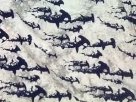 The hammerhead shark print pattern of a shirt owned by shark researcher David Shiffman. (Image Credit: David Shiffman)