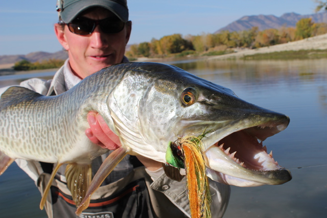 The toothy grin of the muskellunge (Esox masquinongy). (Image Credit: Gilbert Rowley)