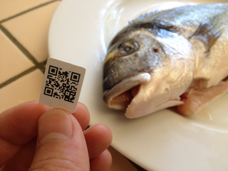 A QR code tag shipped with a daurade royale (Sparus aurata). In the background, the unique, molar-like teeth of the dorade can be seen in its mouth -- a trait common in members of the porgy family, Sparidae. (Image Credit: Ben Young Landis/CC-BY)