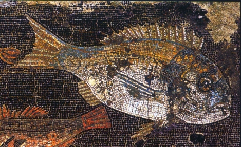 The gilt-head bream (Sparus aurata) depicted in a mosaic from house VIII.2.16 in the ancient Roman city of Pompeii. Note the characteristic gold-bar on the fish's forehead. (Source: Wikimedia Commons)