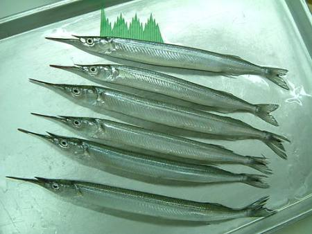 The characteristic lower jaw of the halfbeak family is apparent in this photo. (Image Credit: unknown; sourced from shizuokagourmet.com)