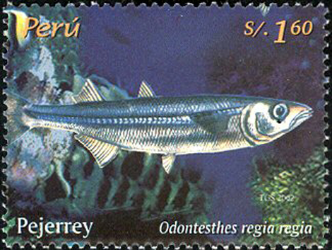 Odontesthes regia featured on a Peruvian postage stamp. (Image Source: www. stampsperu.com)