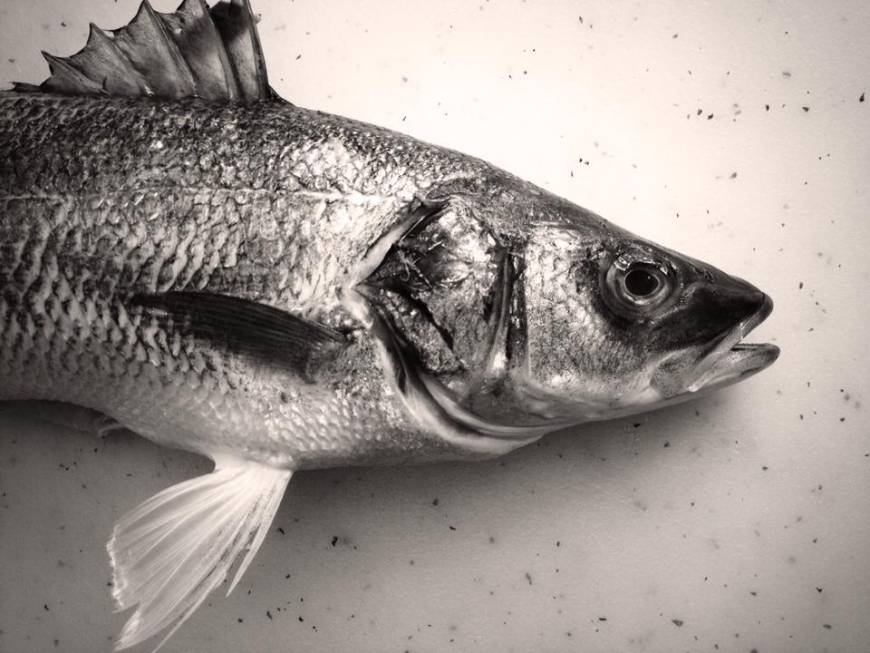 Branzino dicentrarchus labrax better know a fish for What is branzino fish