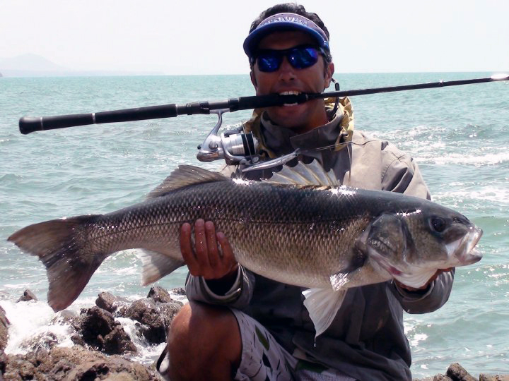 A large European seabass caught off of Morocco. (Image Source: Sabon Abdel/www.theangler-gpc.com)
