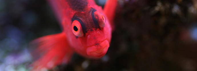 """Who, me?"" (Image Source: Oregon Coast Aquarium)"