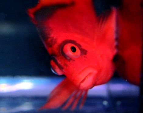 """Hey, how YOU doin'?""  (Image Source: www.pacificeastaquaculture.com)"