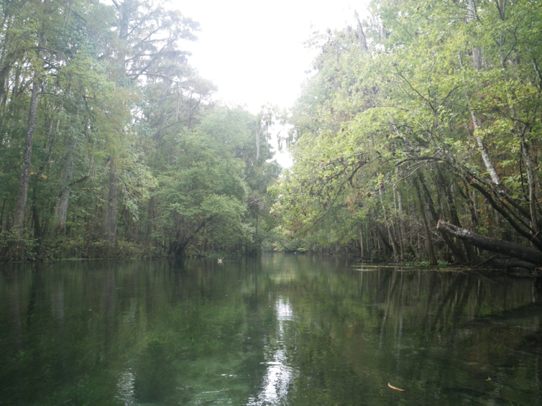 A gray, quiet day on the Ichetucknee River. (Image Credit: Ben Young Landis/CC-BY)