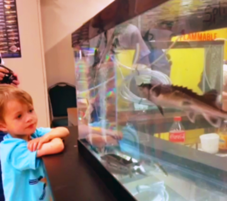 A scene from the California fishes exhibit at the 2014 Picnic Day at University of California, Davis. (Image Credit: Ben Young Landis)