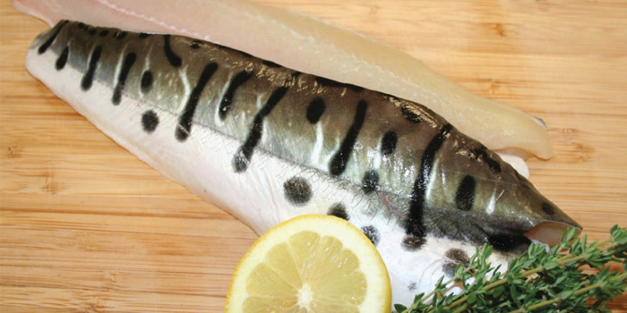 Farmed Pseudoplatystoma fillets distributed by Acme Markets. (Image Credit: Albertsons, LLC)