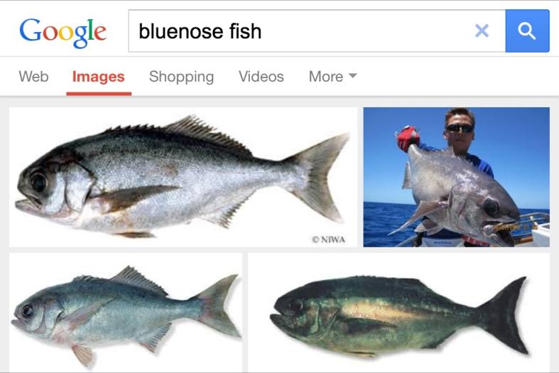 The Google.