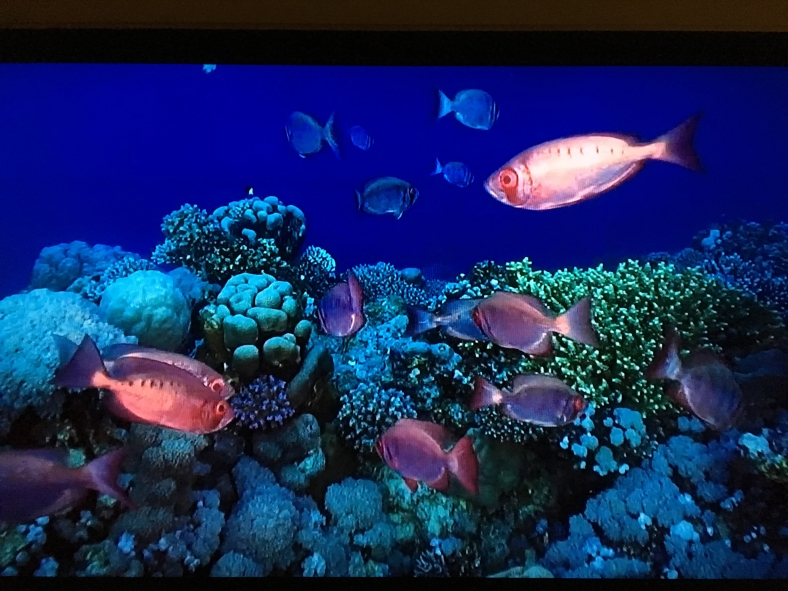 Screen-capture image of moontail bullseyes swimming in a coral reef. Via AT&T U-Verse